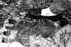 Pe-gigante-encontrado-no-Mississippi-EUA-1976