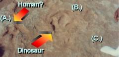 marcas-de-pes-humanos-juntamente-com-patas-de-dinossauros-rio-paluxy-texas-eua2