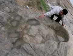 pe-gigante-de-2m60-por-80-cm-encontrado-perto-da-cidade-de-Viet-Tri-provincia-de-Phu-Tho-Vietna-2010