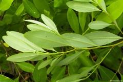 coca-jayo-gnosisonline