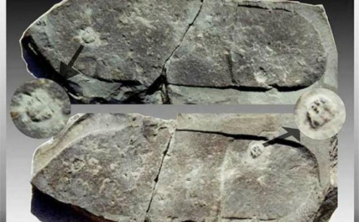 ufognose-pegada-em-trilobita-gnosisonline